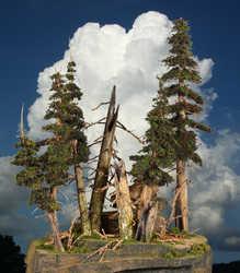 big_treesa.jpg